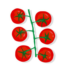 tomatoes on a branch vector image