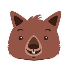 Wombat face australian wildlife white background vector