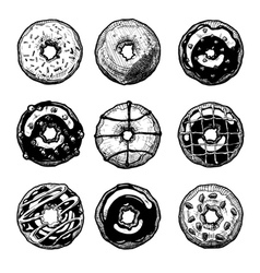 set of doughnuts vector image