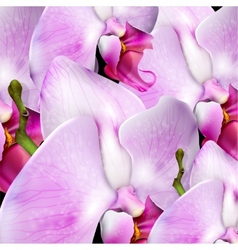 Flower background with blossom orchid vector