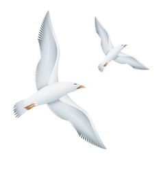 Flying seagulls birds vector image