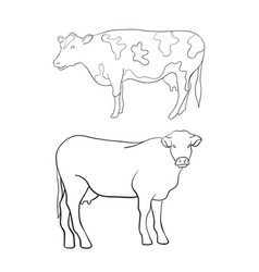 line art animal cow vector image