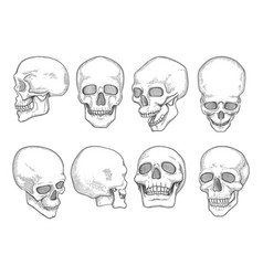 skulls human anatomy bones head skull mouth and vector image