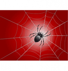 Spider on wed vector