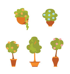 plants and flowers in pots flat style vector image vector image