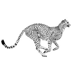 cheetah points dot design vector image