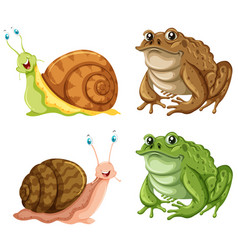 frogs and snails on white background vector image