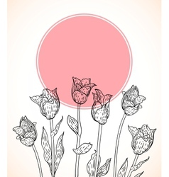 card with hand drawn tulips on pink circle vector image vector image