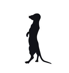 Black silhouette african meerkat vector