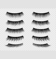 false lashes realistic eyelashes fake thick lash vector image