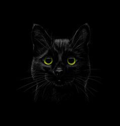 portrait of a cat on a black background vector image