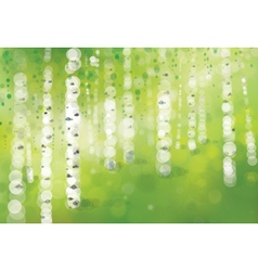 spring birch forest vector image