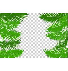 summer jungle palm leaf frame vector image