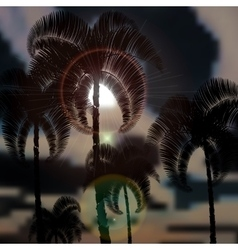 Tropical palm trees before the storm Sun rays vector image