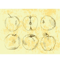 Set of highly detailed hand drawn apples vector image