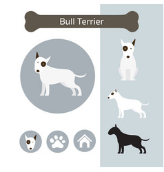 Bull terrier dog breed infographic vector