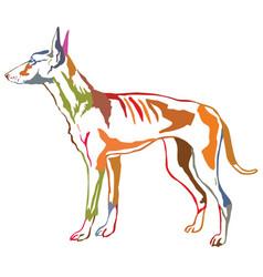 Colorful decorative standing portrait of podenco vector