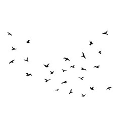 flying bird flock birds black silhouettes vector image