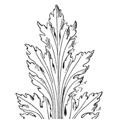 french leaf renaissance was found in a church in vector image