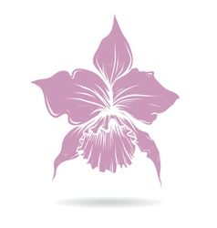 Hand drawn lilly flower purple vector image
