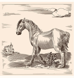 Horse without a saddle vector