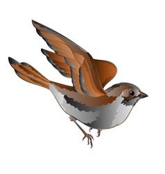 Little bird cub sparrow passer domesticus in flig vector