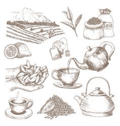 Tea drink herbal beverage with dry leaves vector