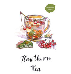 cup of hawthorn tea with green leaves vector image vector image