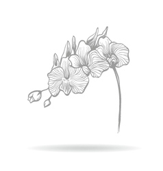 Hand drawn orchid flower vector image