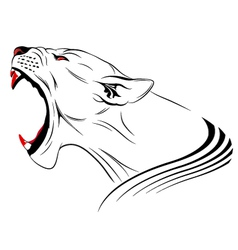 lioness vector image vector image