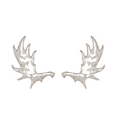 Elegant drawing elk or moose antlers isolated vector