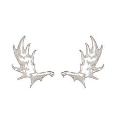 Elegant drawing elk or moose antlers isolated vector