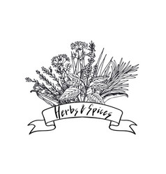 Hand drawn herbs and spices in bouquet vector