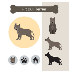Pit bull terrier dog breed infographic vector