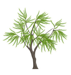 realistic elegant tree isolated on white vector image