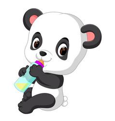 cute baby panda holding milk bottle vector image