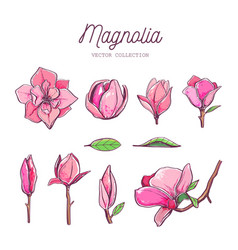 magnolia flower set hand drawn botanical 7 vector image
