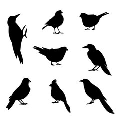 a set of silhouettes of winter birds vector image