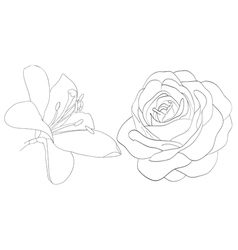 set of shape roses and lilies isolated on white vector image vector image
