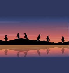 beauty scenery with penguin vector image