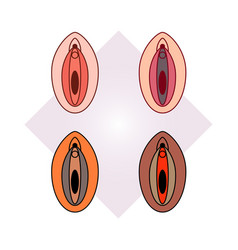 four multi-colored female genital organs vector image