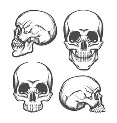 human skull front and side view set vector image