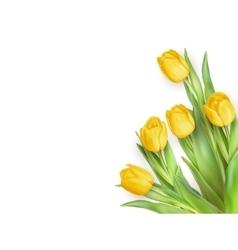 Yellow Tulips Flowers EPS 10 vector image