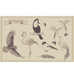 Birds set Hand drawn bird Vintage design vector