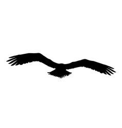 Black silhouette eagle falcon hawk or orel vector