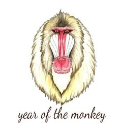 Face of baboon monkey vector