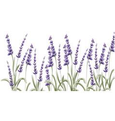 lavender card watercolor vector image