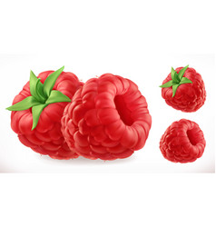 raspberries fresh fruit 3d realistic icon vector image