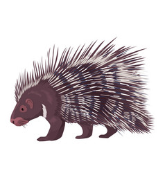 porcupine isolated vector image vector image