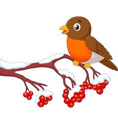 Cartoon beautiful robin bird posing on the berry vector image vector image